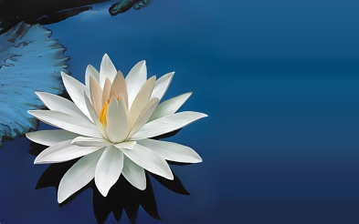 lotus-flower-images-and-wallpapers-3 C